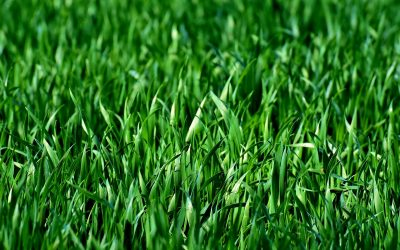 Green Grass, Fences and Septic Tanks